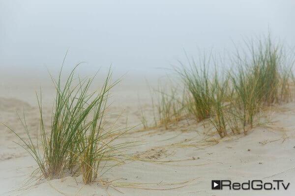 Dünengras im Nebel