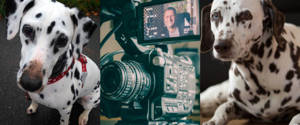Der mit der Kamera und den Dalmatinern